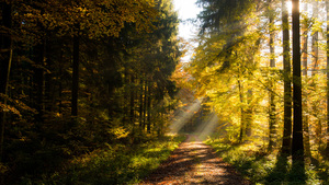 Herbstwald Indian Summer - DSC_1535.jpg